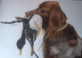 Dog and duck by Vitadog