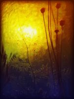 Yellow Haze by roryrobot