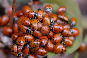 Ladybugs I by silverstag21