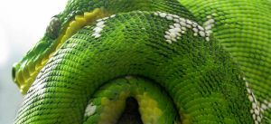 Green Snake by Artsee1