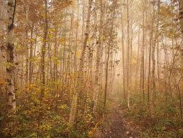 Enchanted forest by yuushi01