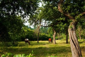 Horses in the old apple grove by steppeland