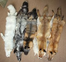 fox pelts by Nimgaraf