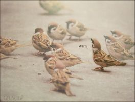 Why? by grace-note