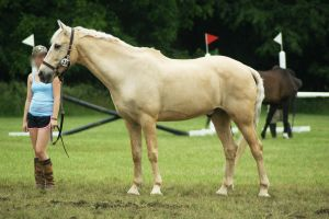 Eventing Horse Show Stock 10 by almondjoyy5
