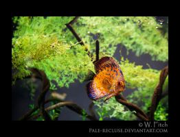 Bright Fish by Pale-Recluse