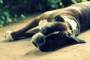 Lucky by TammyPhotography