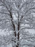 Snowy Canopy by Nightwalker50