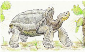 Galapagos Trip Sketches: Galapagos Giant Tortoise by DevinNath