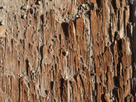 Wood Structure Pattern by DustwaveStock