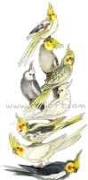 Cockatiel Stack by Foxfeather248