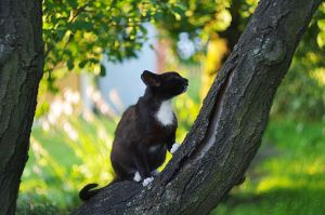 cat on the tree by efeline