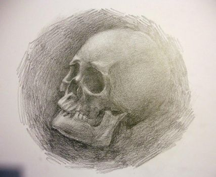 Quick sketch, skull by dnomaid