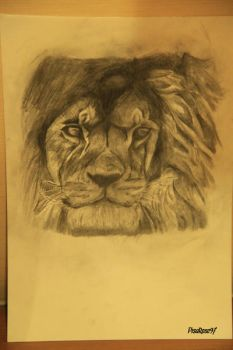 Lion by PisaRose97