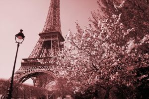 Paris in the Spring by reefster39