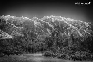 Winter Glow on the Trees BW by mjohanson