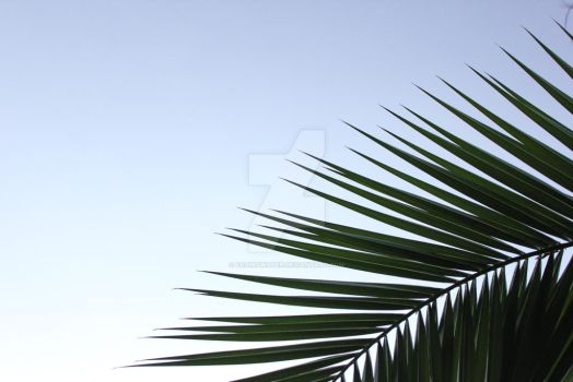 Palm by FadingWater