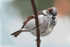 Sparrow study by duduOmag