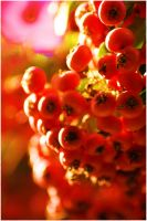 red 2 by wildtea