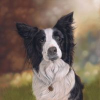 Collie dog portrait by artbykarieann