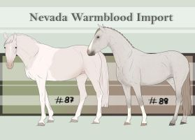 Nevada Warmblood 87-88 by BRls-love-is-MY-Live