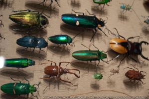 Bugs : 04 by taeliac-stock