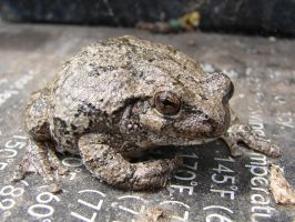Tiny Toad 6 by FantasyStock