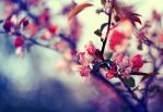 pink spring by BaxiaArt