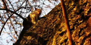 Squirrelbo by tastybedsore