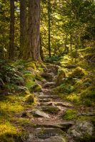 Down the Hobbit Path by Zaralith