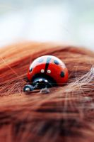 Ladybird by LesiaPominova