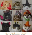 Halloween Cats by PaleGothGoddess