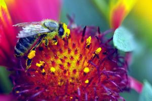 ornate bee by sumahli