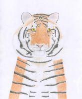 Siberian Tiger by Darkshine-Dragon