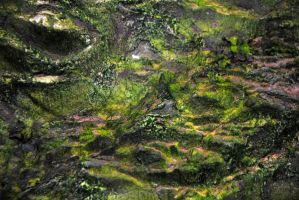 moss on rock by LucieG-Stock
