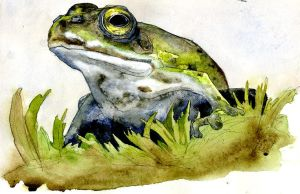 Frog study by bigredsharks