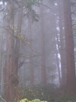 Foggy Forest II by ArtistStock