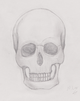 Skull by iBoy98