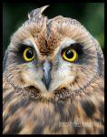 An Owl's Gaze... by SeaSpryte