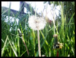 Blowball by BeJay