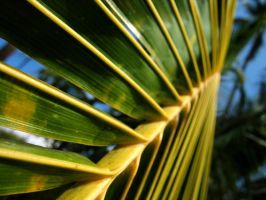 Up the Palm Frills by abjam77