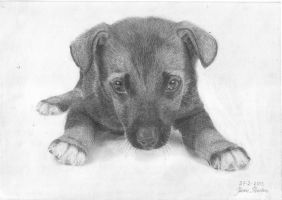 Sixth drawing - Sweet Puppy by Jeroen88