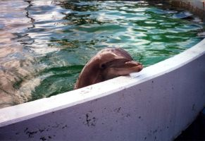 dolphin by coolingj7j77