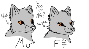 New female wolf face shape by fluffylovey