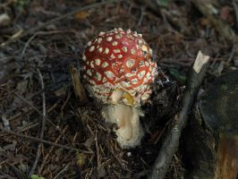 August 22nd Fly Agaric by Taliesin-Neonblack