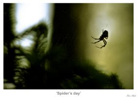 Spider's Day by MrColon