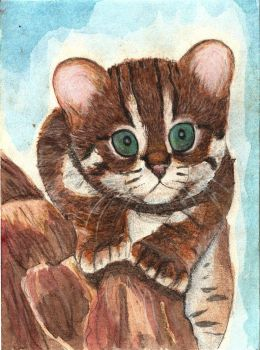 Rusty-Spotted Cat by KathleenBennet