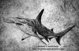 Hammerhead Shark by 8TwilightAngel8