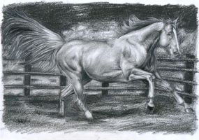 A free Horse - with graphite by Thubakabra