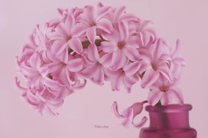 Pink Hyacinth 41 by Deb-e-ann